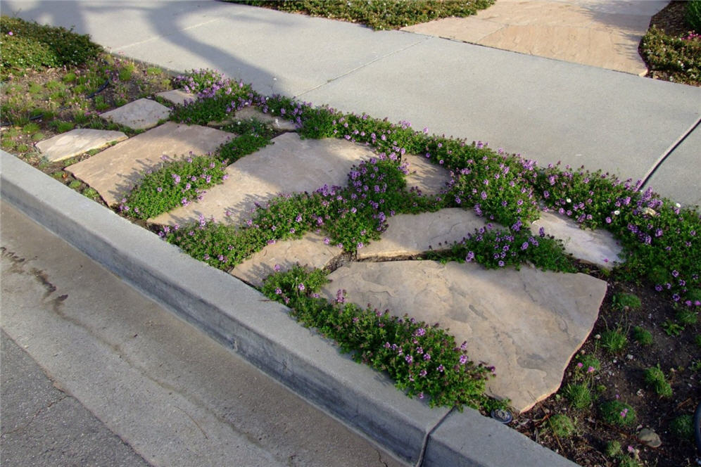 Groundcover Woven Between Pavers