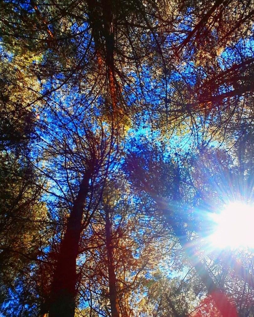 trees_nature_beautiful