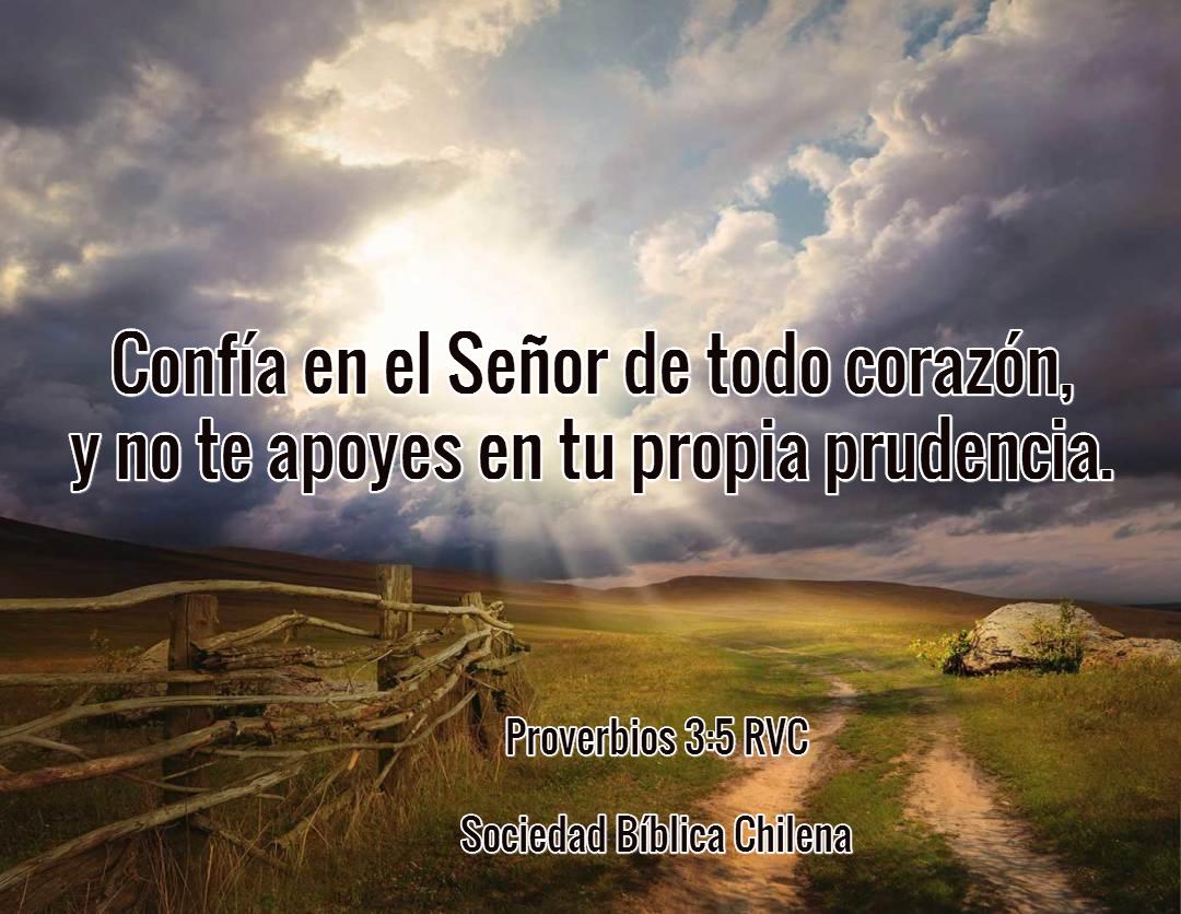 Versículos Para Mantener La Fe Viva Y Perseverar Sociedad Bíblica Chilena