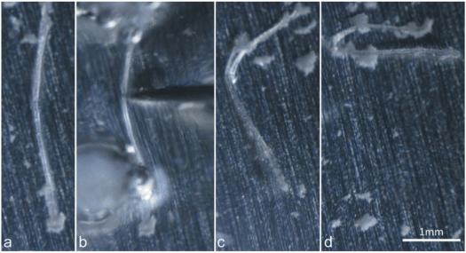 Трехточечный изгиб кристалла кислого малеата L-лейциния в жидком азоте
