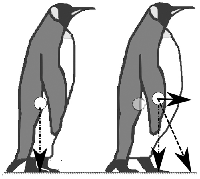 emperor penguin diagram wiring for 2 lights and switches king diagrams simple watch this waddling on a treadmill science nature