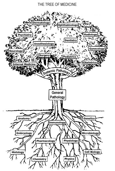 The Tree of Medicine: