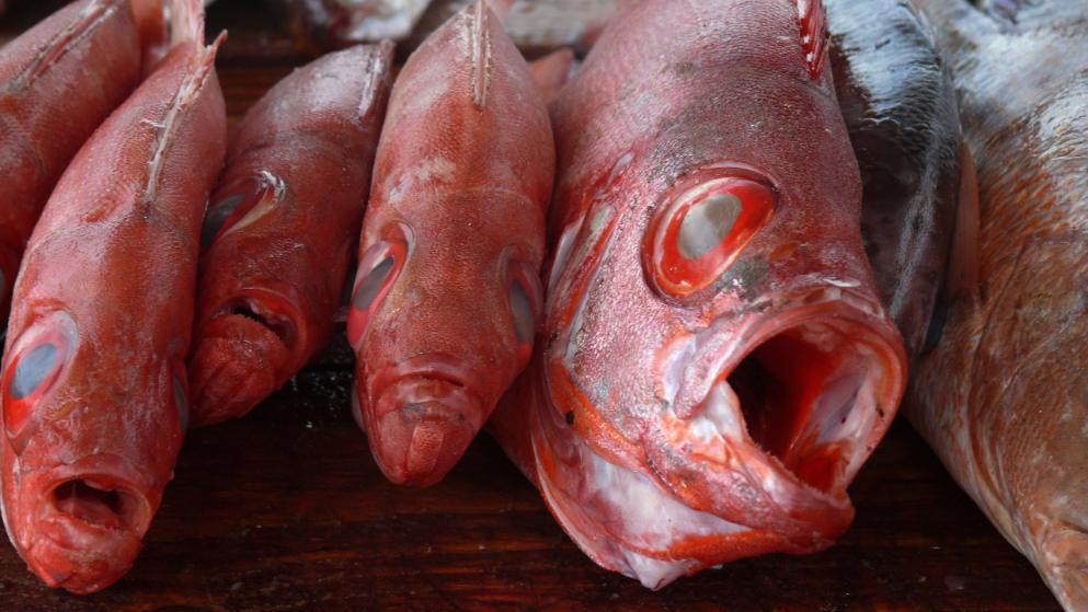Đức cảnh báo cá hồng từ Việt Nam có thể gây ngộ độc