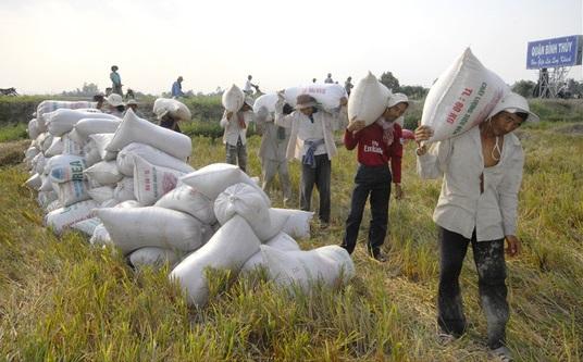 Việt Nam đang bao cấp gạo cho nhiều nước