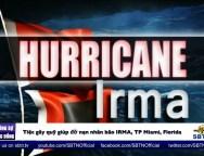 bão IRMA
