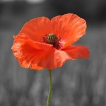 Remembrance, Reflection and Celebration in Lewes @ Town Hall | England | United Kingdom