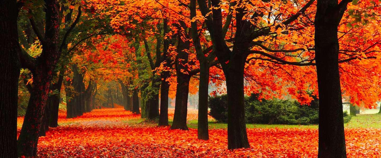 Fall Foliage Wallpaper For Computer Herfstvakantie Scalda