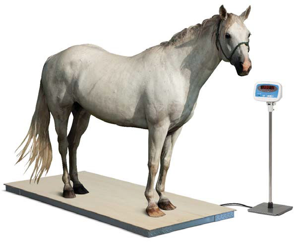 Salter Brecknell PS3000HD Floor Scale  Veterinary Scale