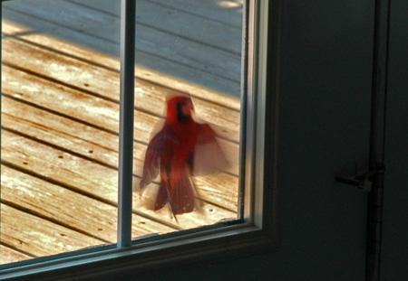 birdie0523a.jpg