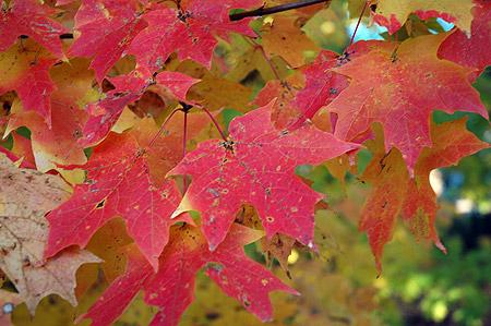 leaves051030.jpg
