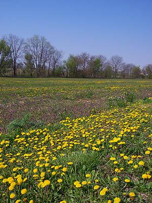 pollen0420.jpg