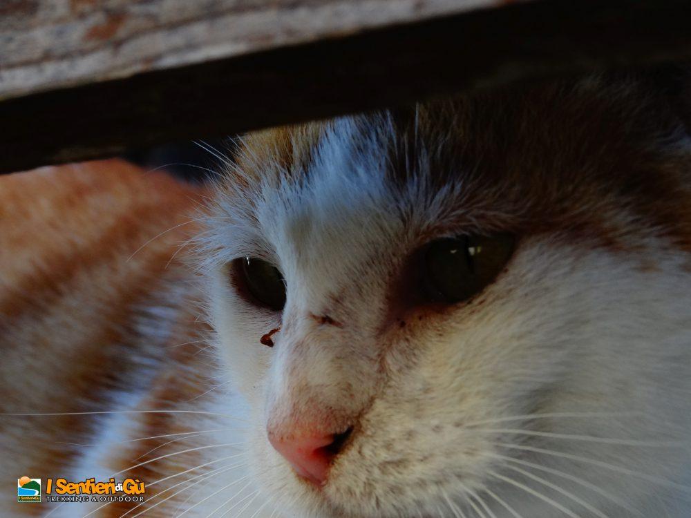 Il gatto con le infradito – Scaminando