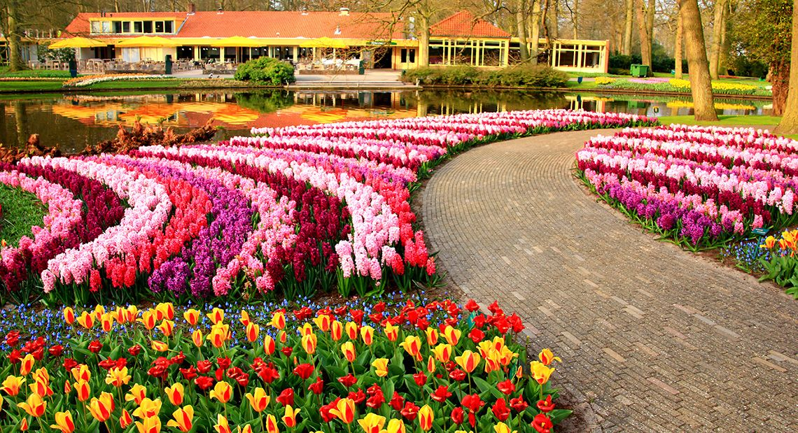Keukenhof Park, just south of Amsterdam, features millions of tulips.