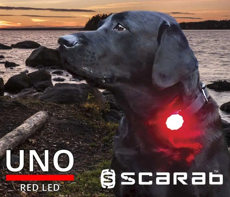 Scarab Beacon UNO RED Dog Light