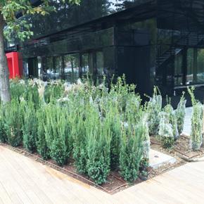 piante Unaway Bologna lavori in corso