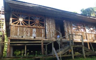 The Amazonian Jungle – Part 1