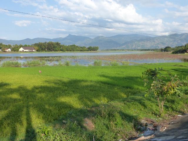 Lak Lake lotus flowers