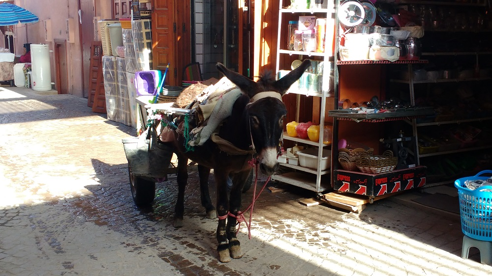 it seems that everybody has a donkey in Morocco