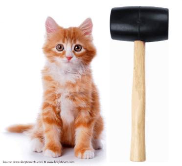 mallet and kitten sml