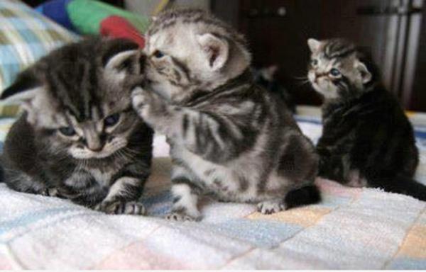 kitten_telling_a_secret