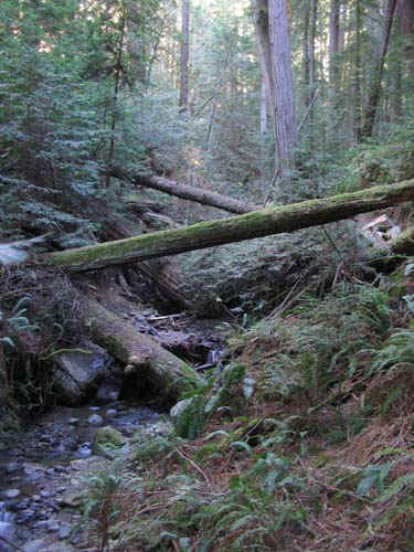 Fallen trees were everywhere! You got to jump over, go over, and if you were lucky, run right into them!