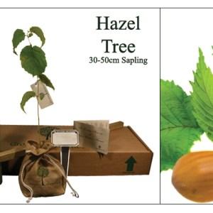 Hazel  memorial tree for ashes