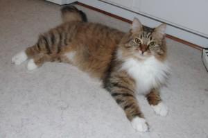 Stella 1 år