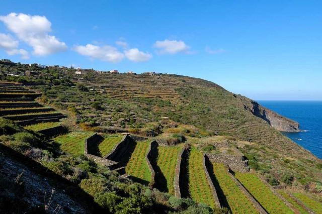 Unesco La Vite ad Alberello di Pantelleria e larte della