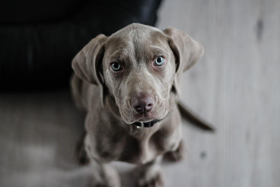 Adoption, vente, achat, passeport : Infos sur les documents de votre chien