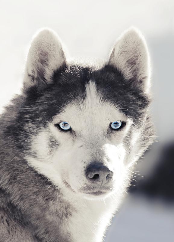 Comment choisir son chien ?