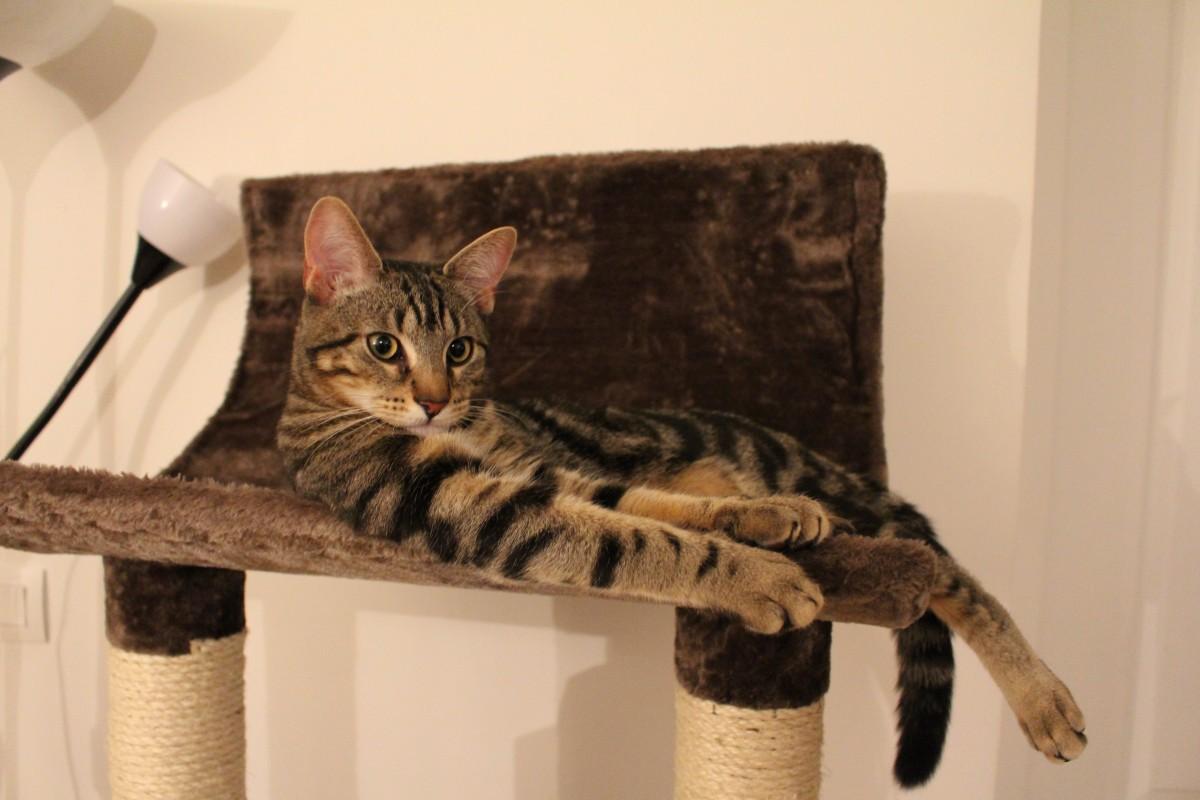 Arbre à chat : Pourquoi est-il aussi indispensable de l'avoir à la maison?