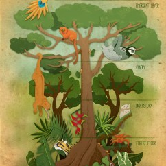 Tropical Rainforest Diagram Plant Cell And Labels Scbwi Illustrator Detail