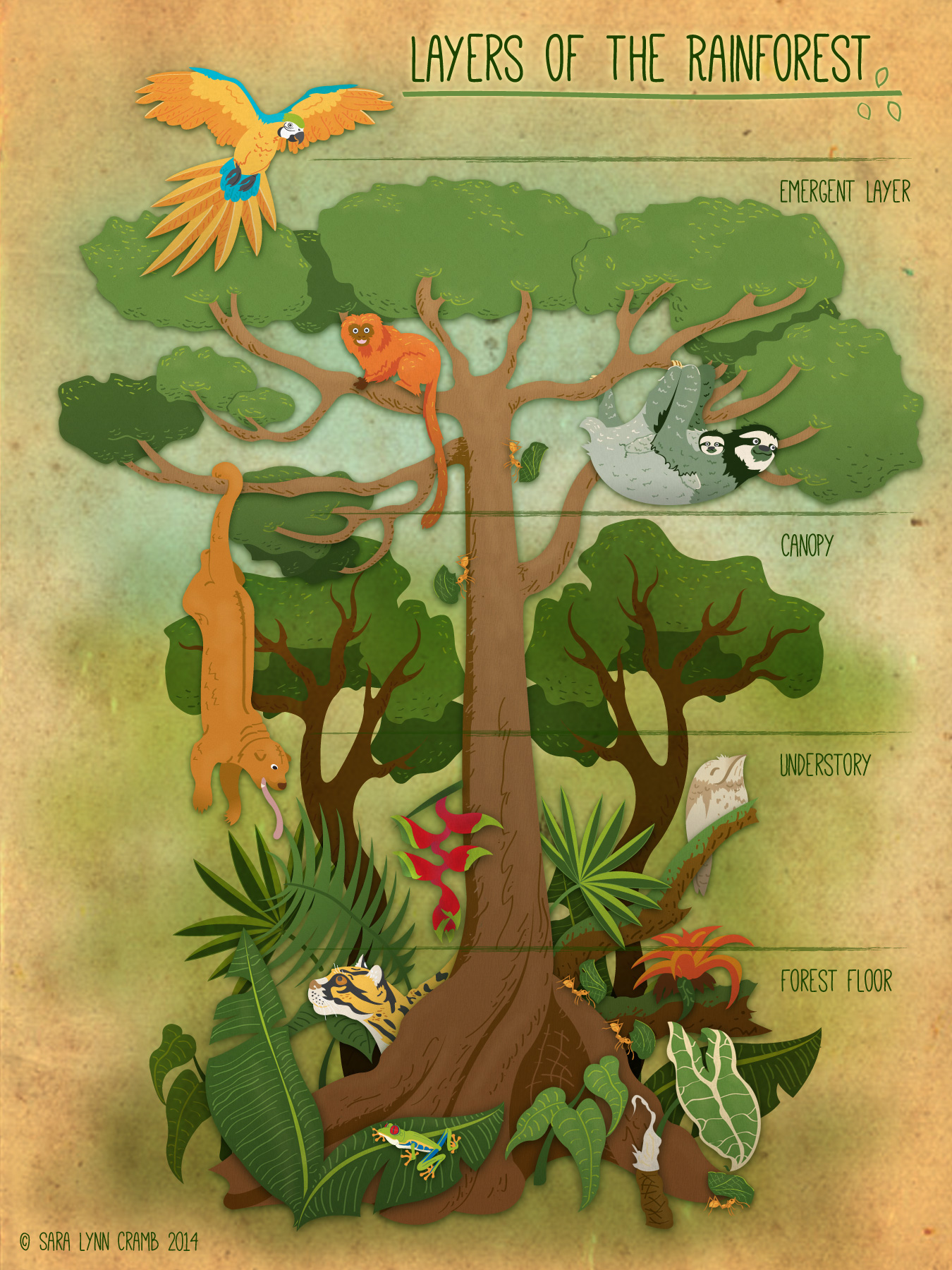 diagram of a tropical forest 2002 impala wiring animals in rainforest layers nice place to get