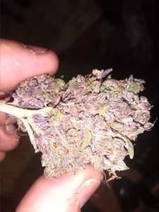 Medical Marijuana Strain