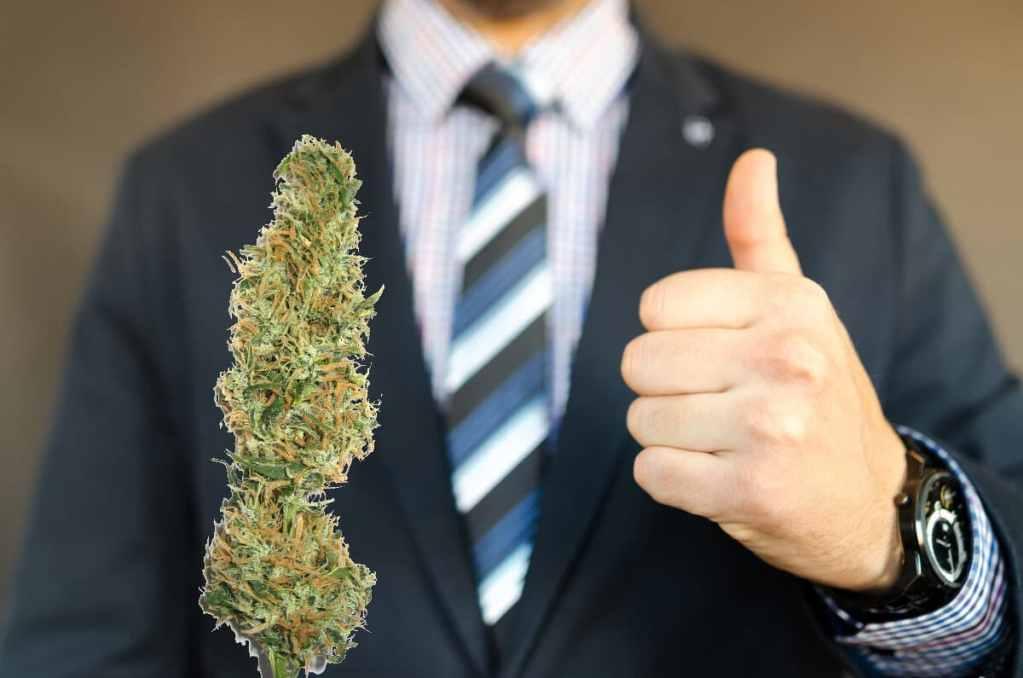 marijuana conservative