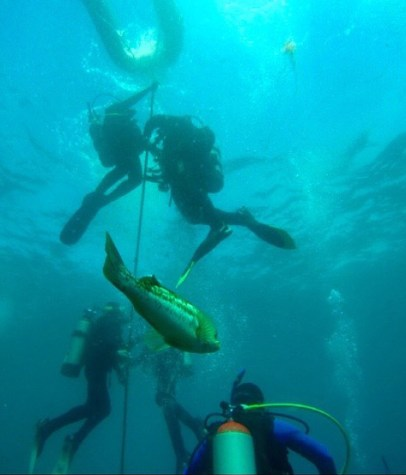Bennett-Smith scuba dives off Catalina Island.