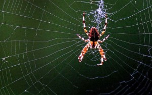 spider-web-photo
