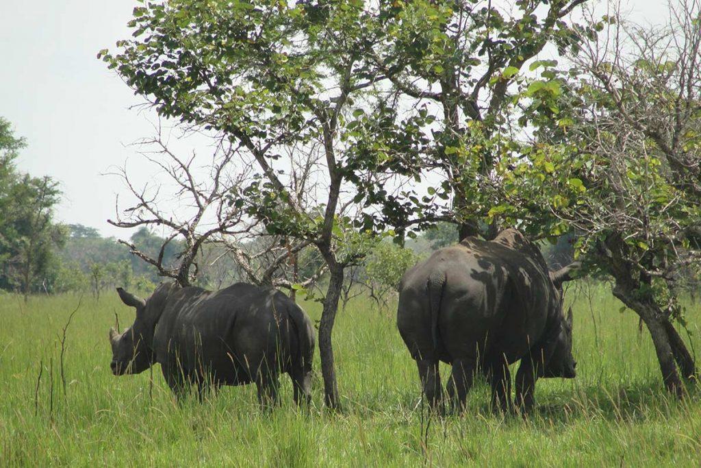 Ziwa Rhinos - Gorillas, Chimpanzee & Wildlife Safari