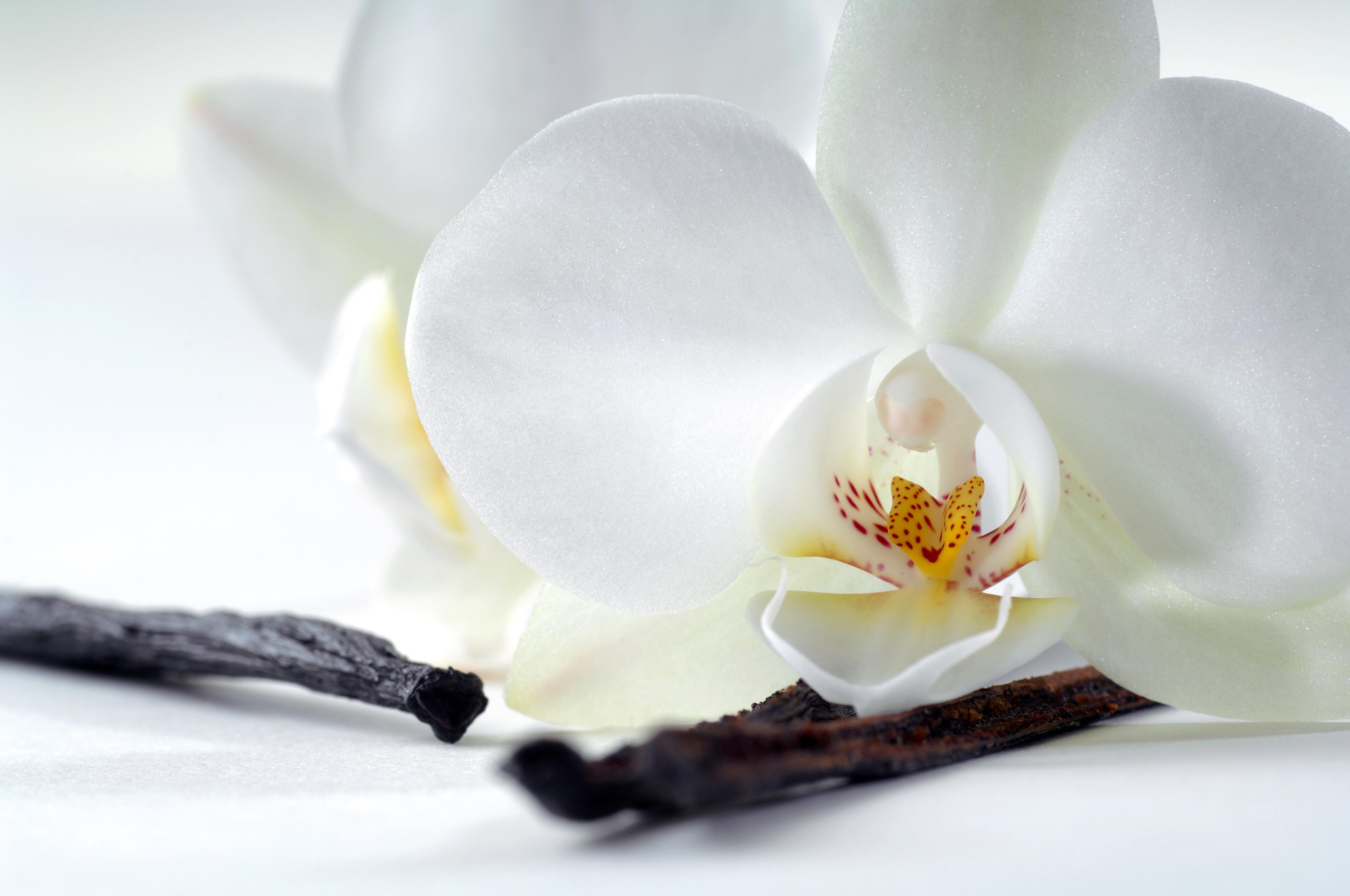 Scent Spotlight: Best Vanilla Scented Perfumes