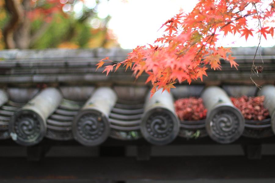 nanzenji autumn2