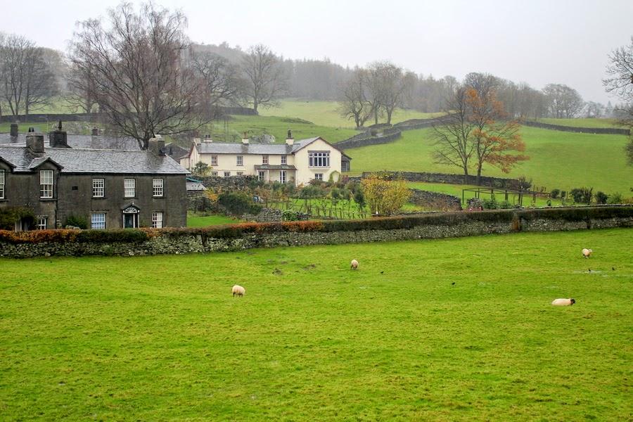 lakedistrict sheep4