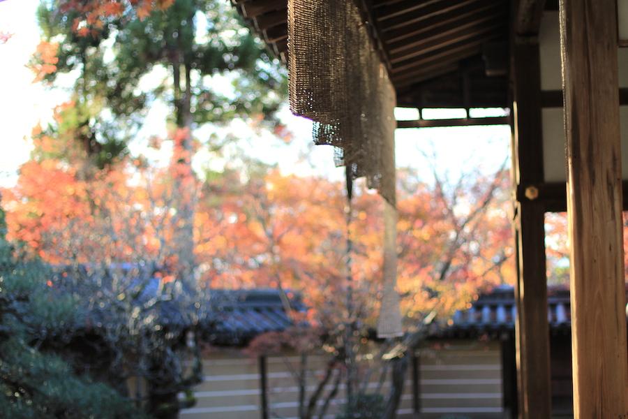 eikando autumn7