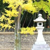 【京都洛北】一度はゼッタイ食べてみるべき、今宮神社横のあぶり餅!