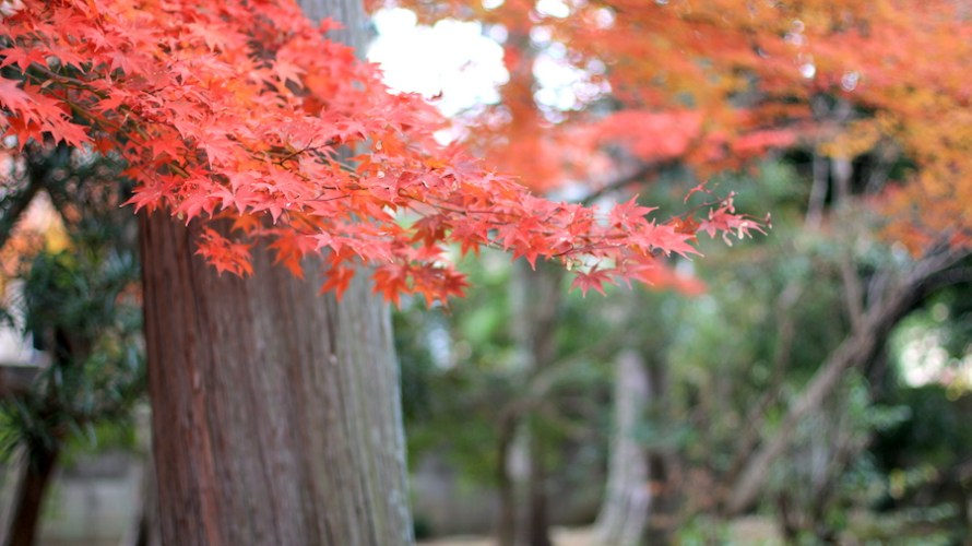 【京都洛北】錦秋の候に訪れた西賀茂の弘法さん「神光院」