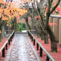 【京都洛北】お気に入りのエリア鷹峯にある「光悦寺」と「源光庵」
