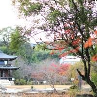 【京都洛南】紅葉の穴場的名所「勧修寺」から巡る山科3真言宗寺院