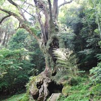 【佐賀】絶景や神秘を訪ねる県内の必見観光スポット4選