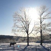 【北海道】経済的な冬旅を考えるならさっぽろ雪まつり期間は札幌周辺を避けるべし