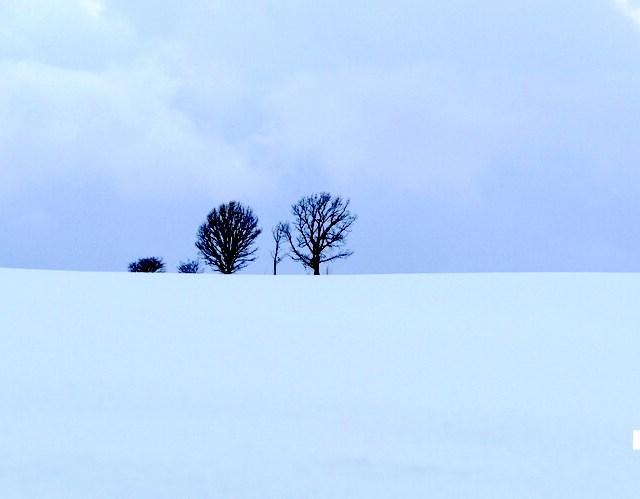 【北海道】人気の美瑛・富良野へ冬に行く際に気をつけたいこと