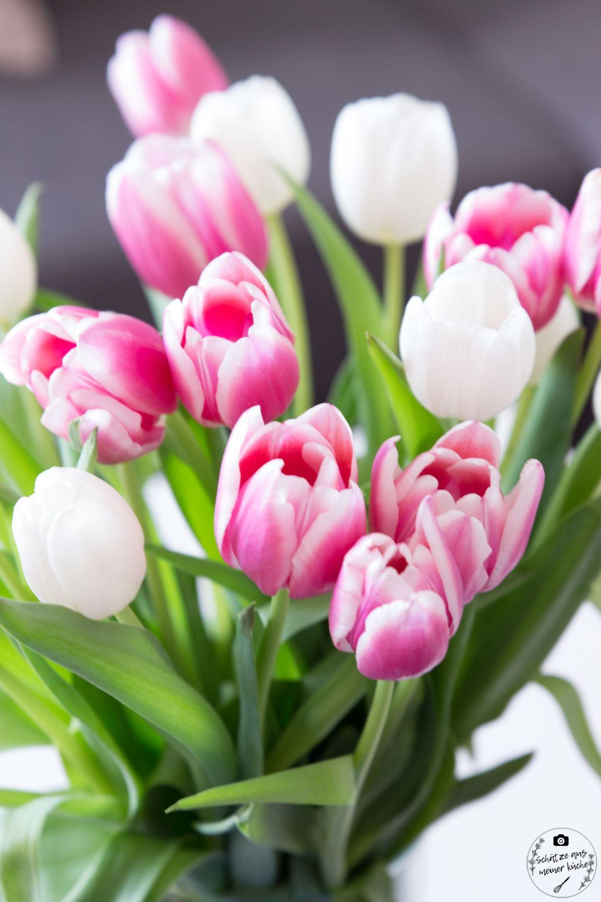 Tulpen Tulips Blumen Flowers Camera Bag Designstraps Hellolulu